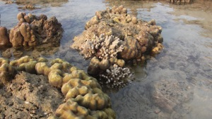 Coral_Island 063